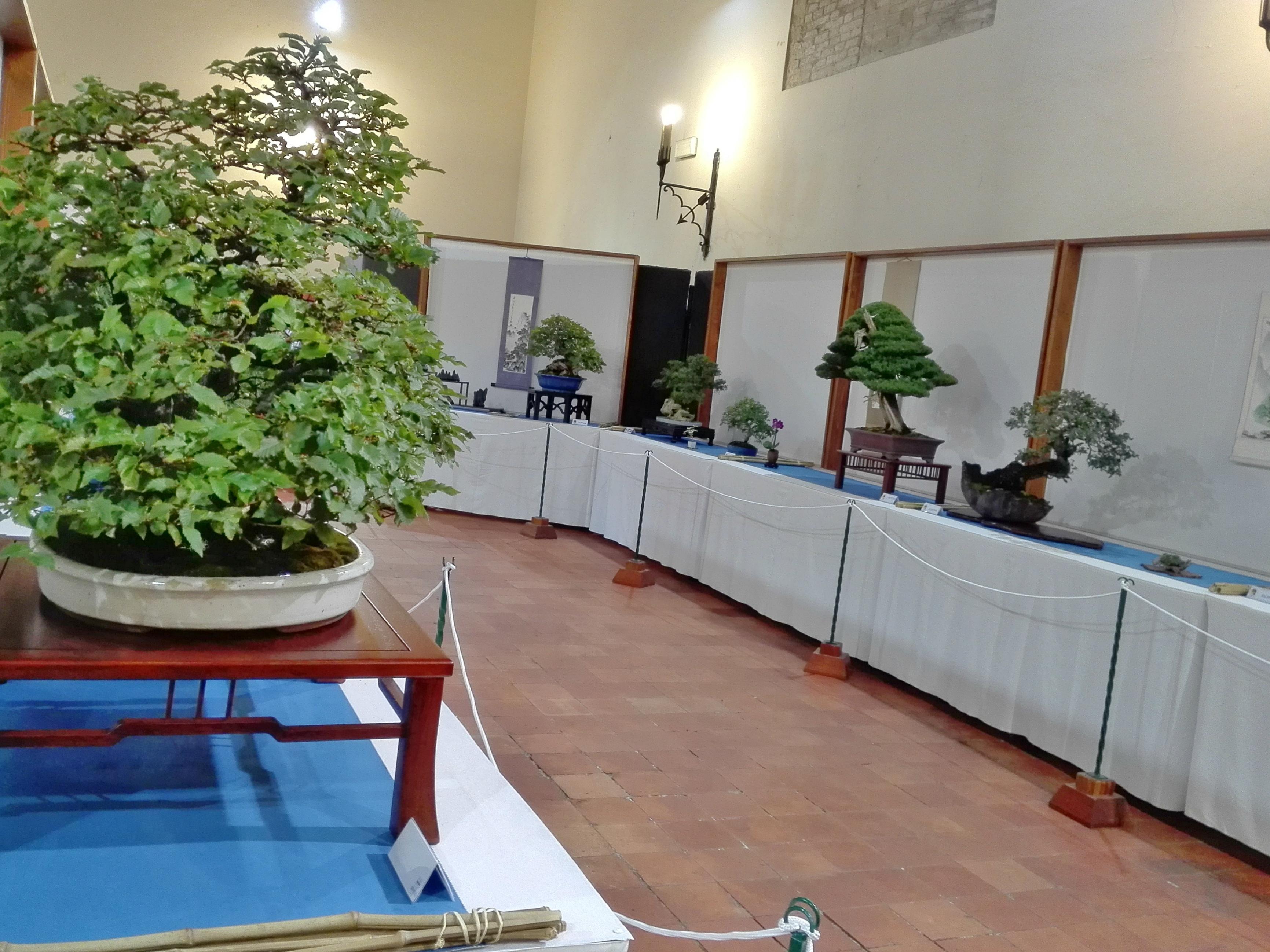 Mostra di Bonsai a Pesaro